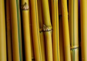 kegunaan bambu kuning mengusir ilmu santet